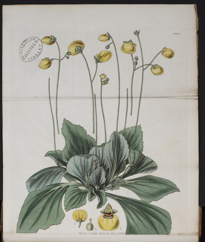 Curtis's Botanical Magazine