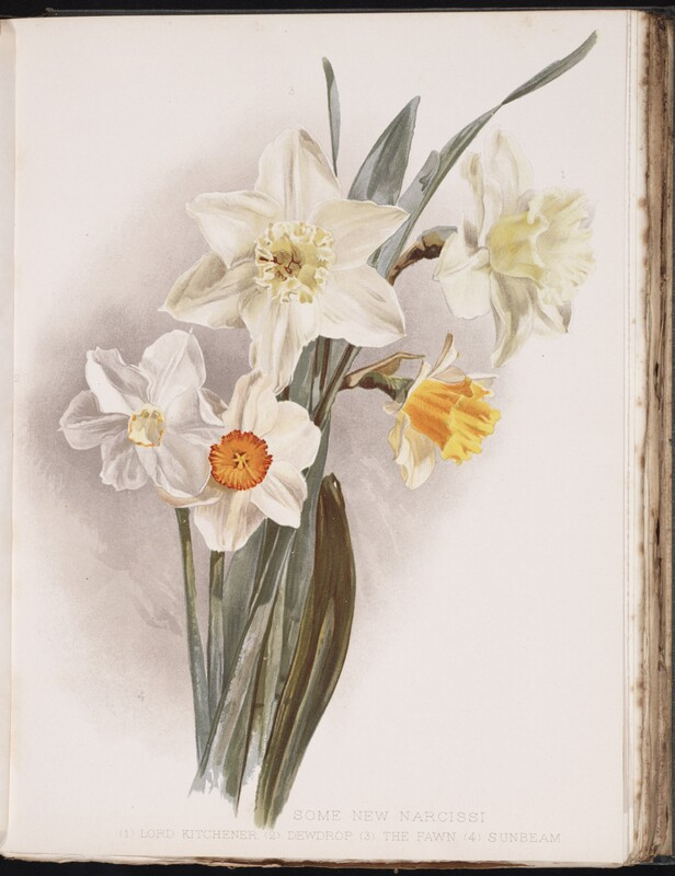 Flora and Sylva : A Monthly Review for Lovers of Garden, Woodland, Tree or Flower.
