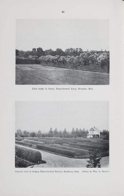 Hedges and their Uses with Notes on Trees and Shrubs Tested for Hedge Purposes at The Central Experimental Farm, Ottawa and Lists of Best Hedges at the Branch Experimental Stations