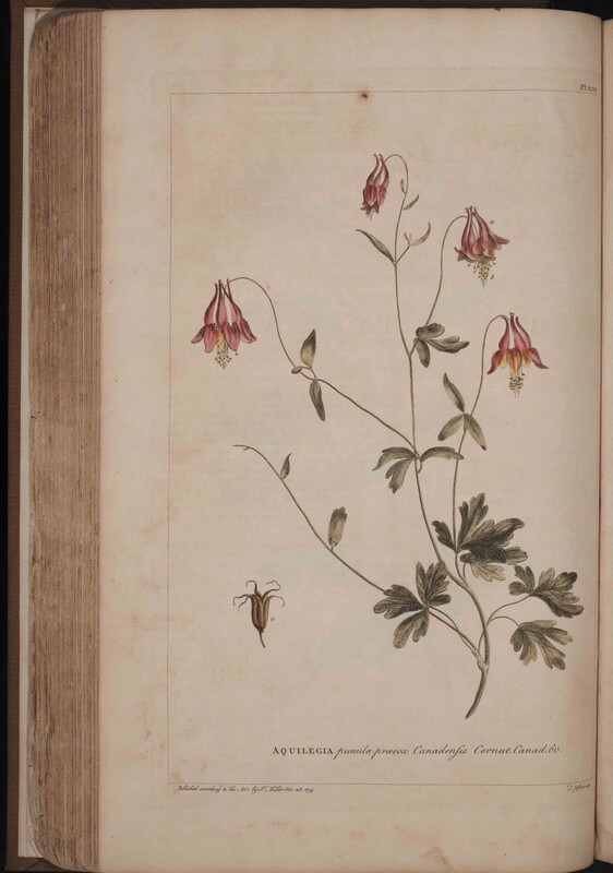 Figures of the Most Beautiful, Useful and Uncommon Plants Described in the Gardeners Dictionary