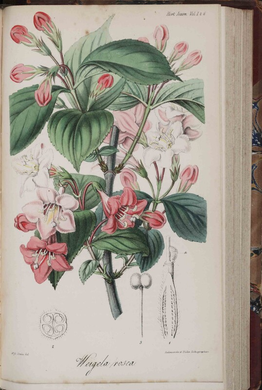 Journal of the Horticultural Society of London