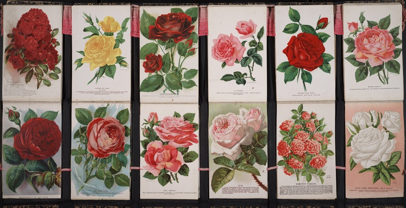 [Collection of colour-printed botanical specimens]