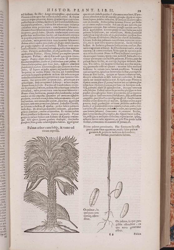 De historia plantarum libri decem, Graecè & Latinè