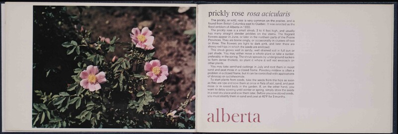 Growing Canada's Floral Emblems