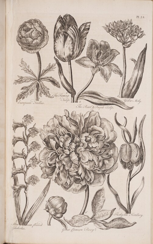 Eden, or, A Compleat Body of Gardening
